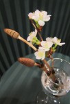 '桜' と 'つくし'  春を感じます ♪